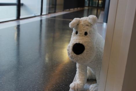 Tintti-sarjakuvista tuttu Milou-koira seikkaili Tilussa naamiaispäivänä kaksin kappalein. Ensiviikon kuvakoosteessa lukijat näkevät myös Tintit! Kuva Pipsa Hämäläinen ja Tua Valtonen.