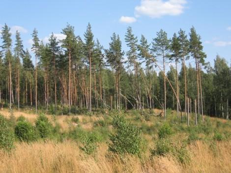 Syöksyvirtaus oli kaatanut runsaasti metsää alueella. Kuva: Mika Meller.